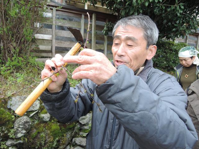 野草の説明をしてくれる正山先生
