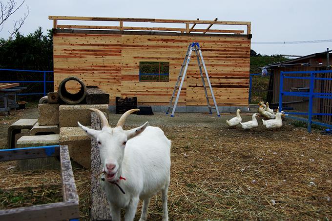帰り際、昨年から飼いはじめたというヤギとニワトリの小屋にちょっと寄り道。奴山の大自然に囲まれたこの場所は、子どもたちが遊べる場所として開放中だそう