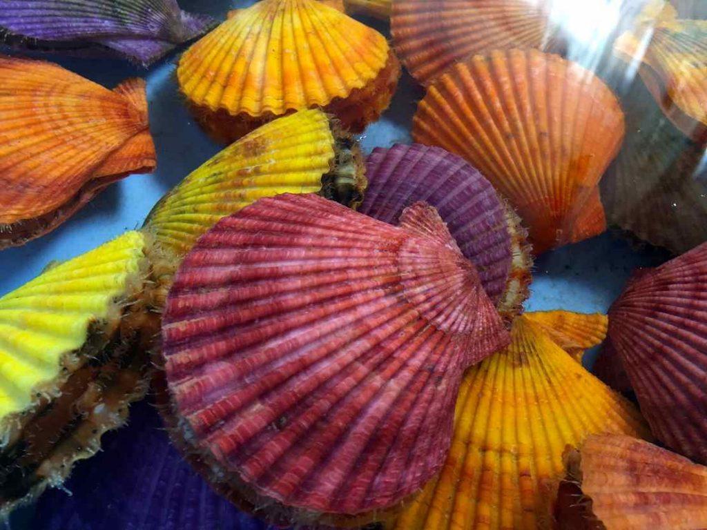 色鮮やかなヒオウギ貝は、肉厚でホタテよりも味が濃く甘みの強い貝。その他にも水俣ならではの食材がいろいろ楽しめますよ〜